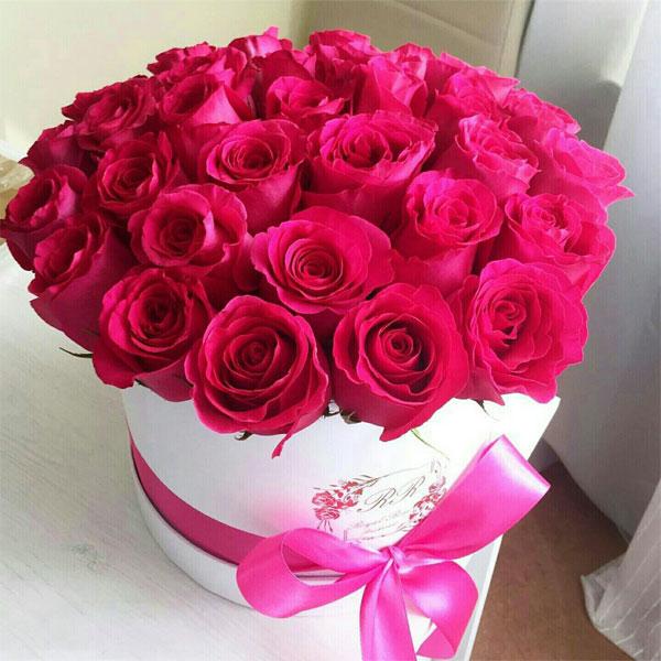 بالصور صور ورد صور ورد , اجمل اشكال الورد والوانه 2659 6