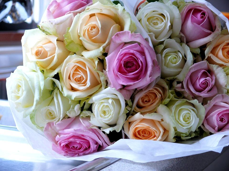 بالصور صور ورد صور ورد , اجمل اشكال الورد والوانه 2659 7