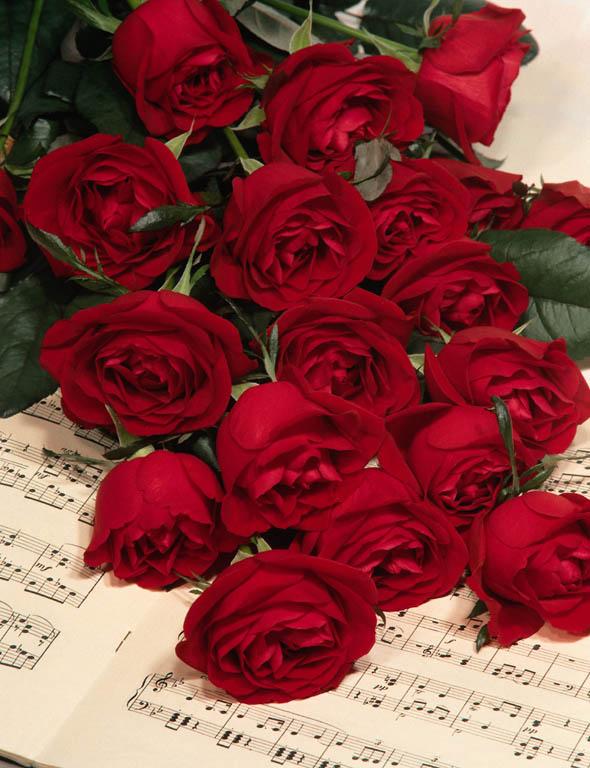 بالصور صور ورد صور ورد , اجمل اشكال الورد والوانه 2659 9