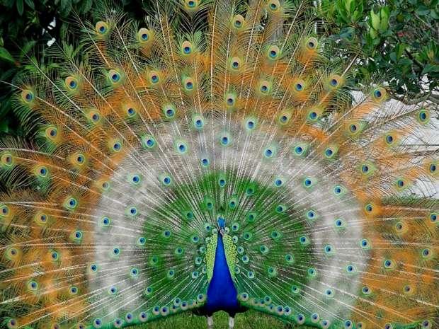 صور اجمل حيوان في العالم , صور لاجمل كائن حي من الحيوانات في العالم