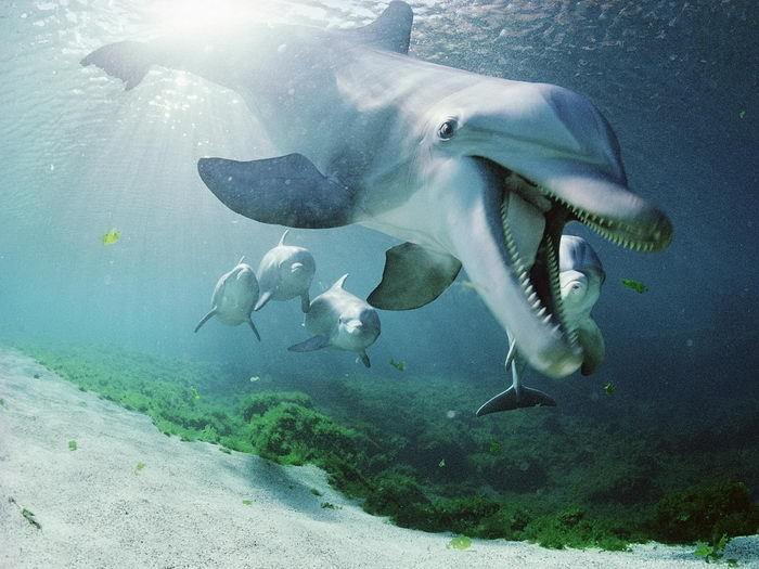 صوره عجائب البحر , غرائب البحر