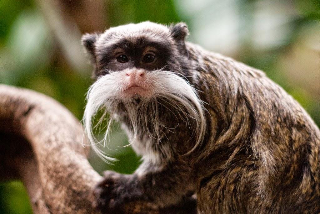 بالصور اغرب الحيوانات , انواعها واشكالها 3260 1