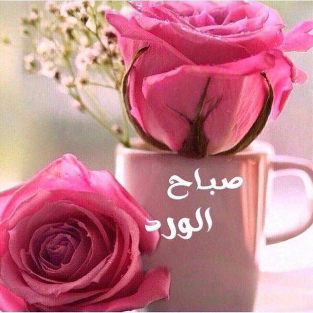صورة ورد صباح الخير , اجمل ورود وصباح الخير