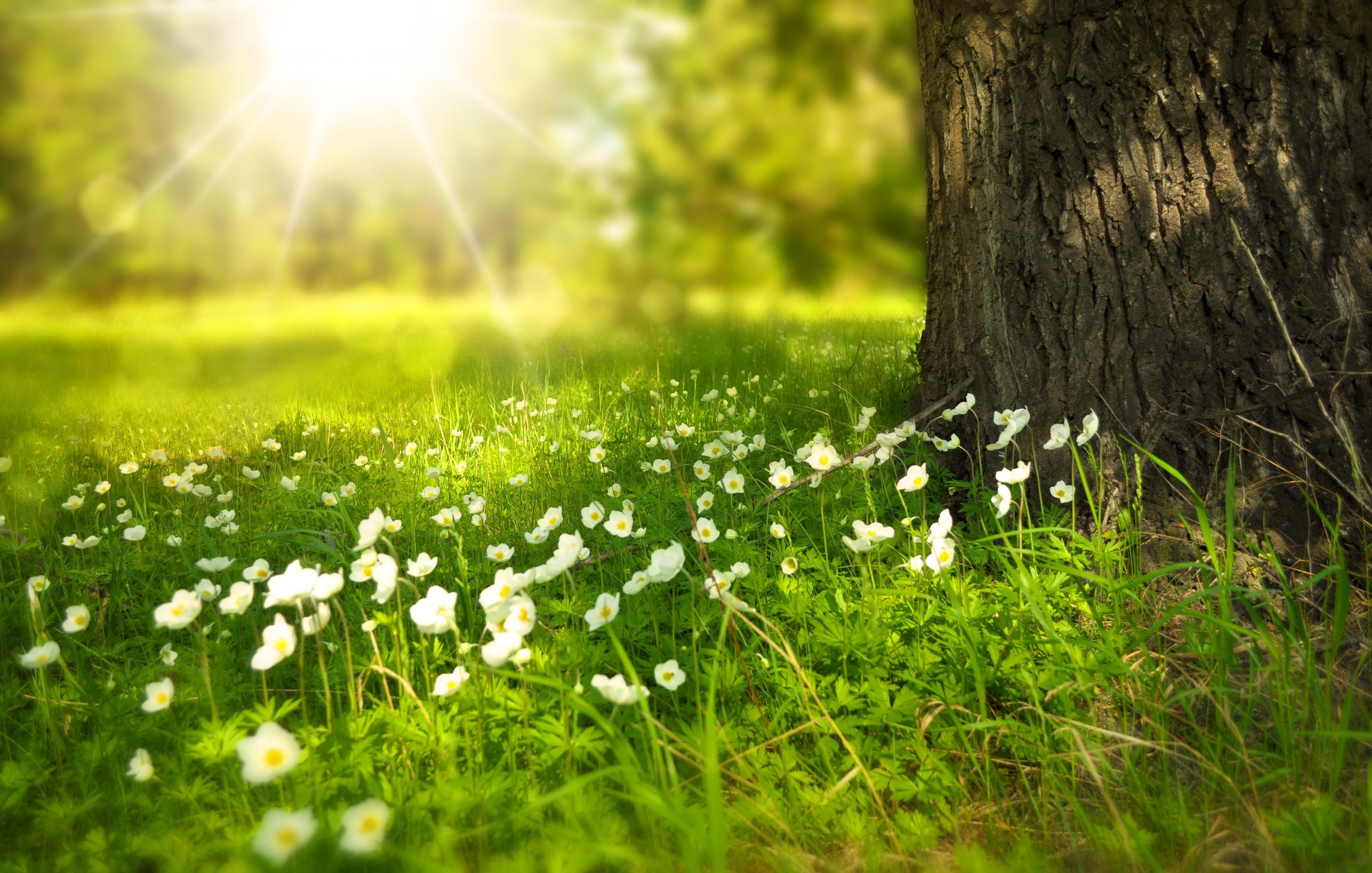 بالصور صور من الطبيعة , اجمل صور عن الطبيعة