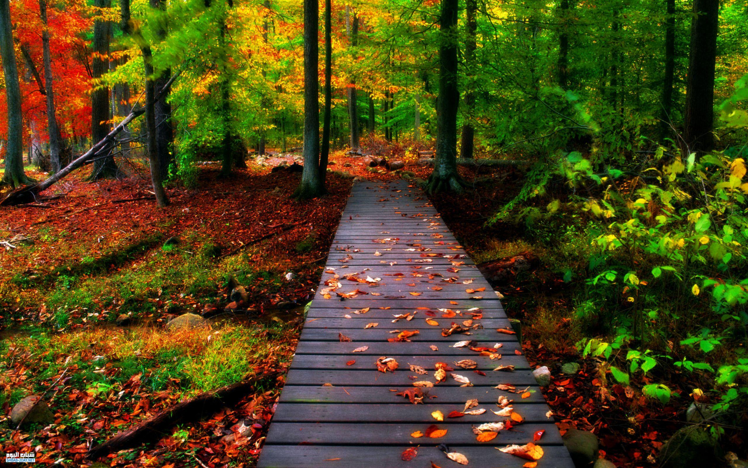 بالصور صور من الطبيعة , اجمل صور عن الطبيعة 3495 4