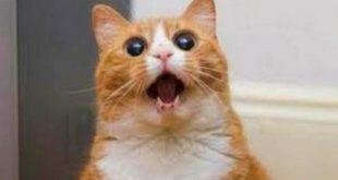 صور قطط مضحكة , اجمل مواقف للقطط مضحك