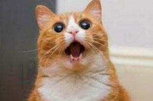 صورة قطط مضحكة , اجمل مواقف للقطط مضحك