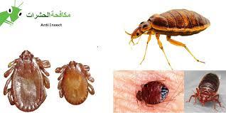 بالصور القضاء على البق , اسوء الحشرات المنزلية وطرق القضاء عليها 3713 2