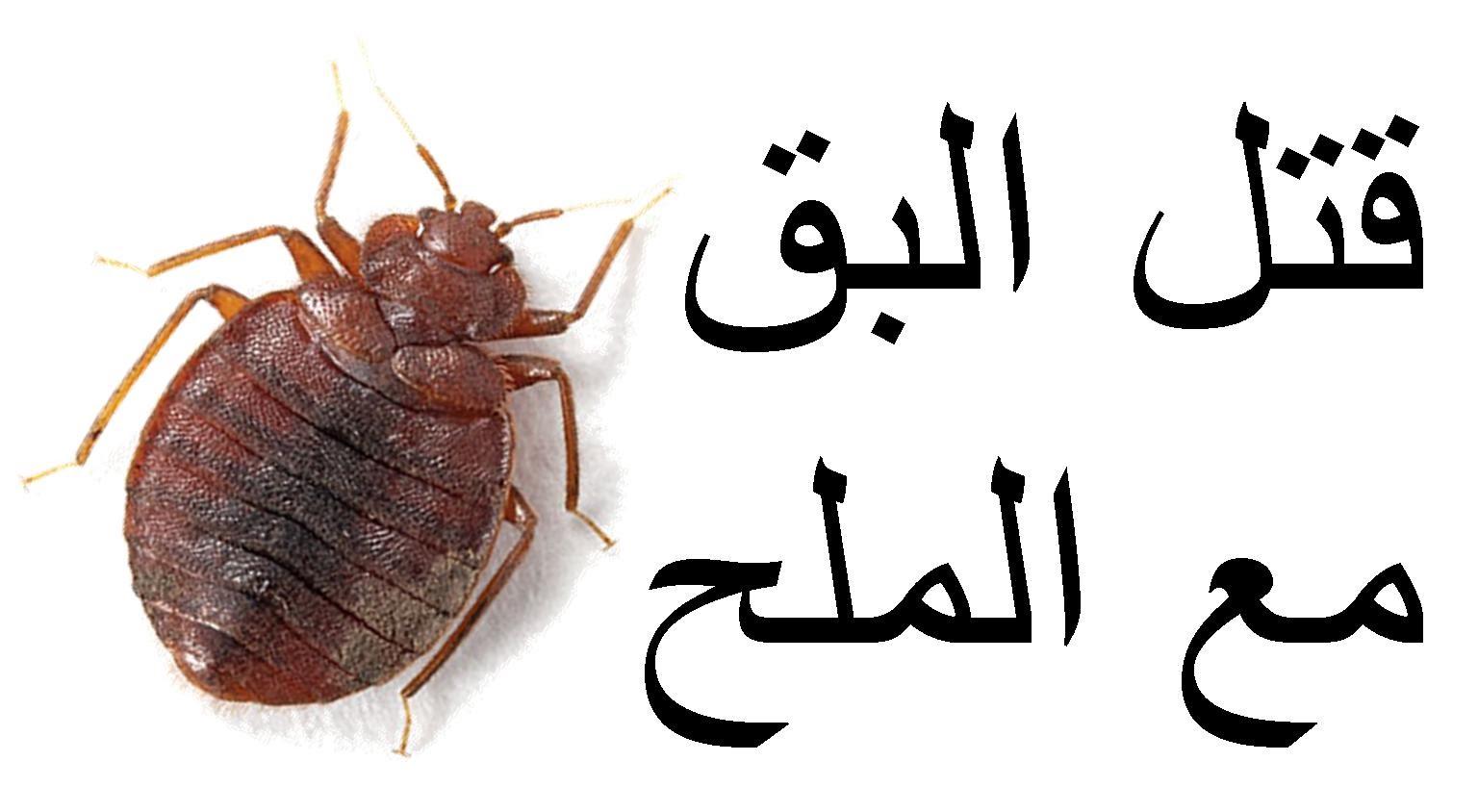 صوره القضاء على البق , اسوء الحشرات المنزلية وطرق القضاء عليها