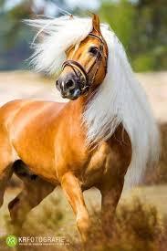 بالصور اجمل صور خيول , من اروع الصور عن الخيول 3715 10