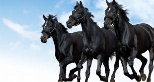 صور اجمل صور خيول , من اروع الصور عن الخيول