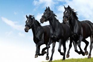 صورة اجمل صور خيول , من اروع الصور عن الخيول