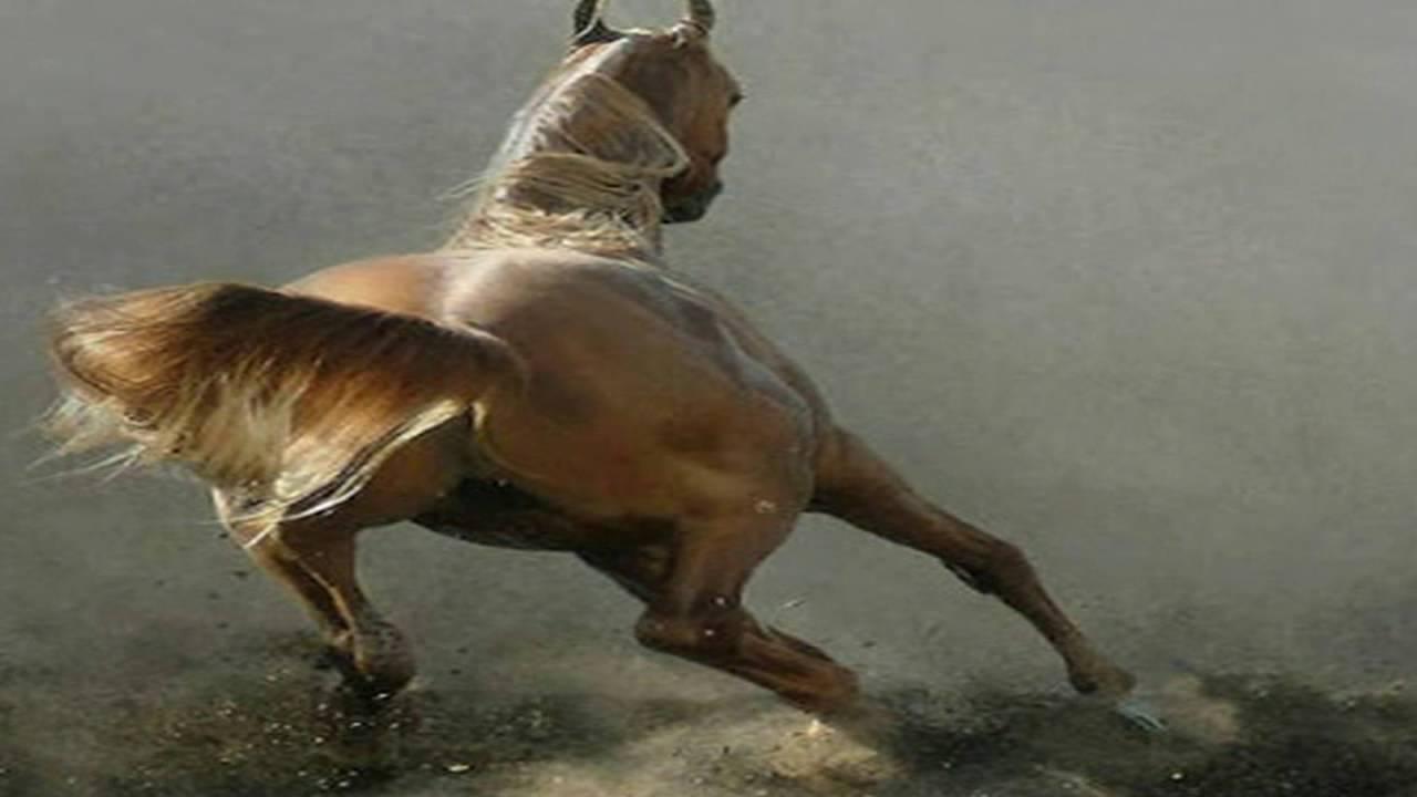 بالصور اجمل صور خيول , من اروع الصور عن الخيول 3715 3