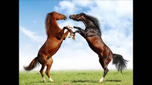 بالصور اجمل صور خيول , من اروع الصور عن الخيول 3715 8
