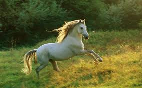 بالصور اجمل صور خيول , من اروع الصور عن الخيول 3715 9