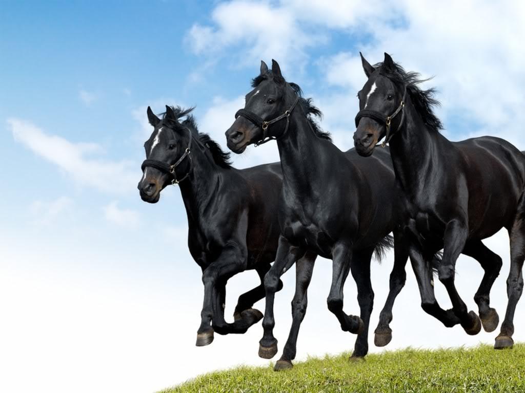 صوره اجمل صور خيول , من اروع الصور عن الخيول