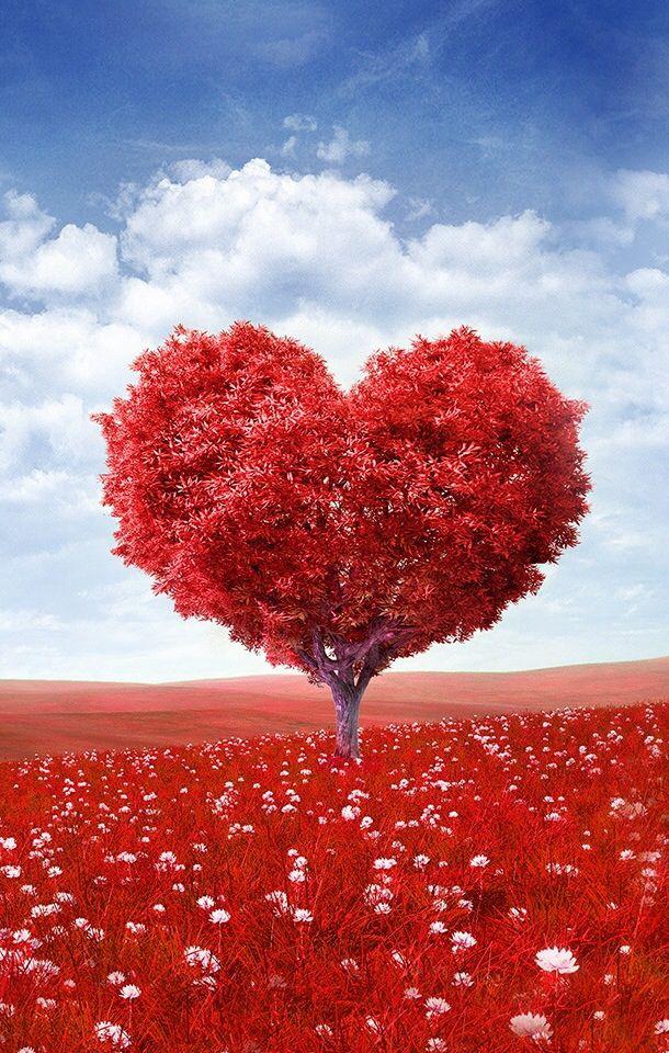 بالصور صور قلوب حب , اجمل صور قلوب للاحبه 4131 7
