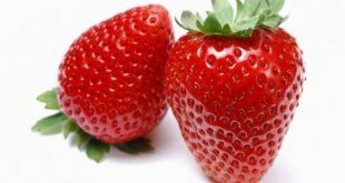 بالصور فوائد الفراولة , تعرف على فرائد مدهشة عن فاكهة الفراولة 458 2 310x165