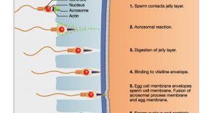 صوره كيفية حدوث الحمل , تعرفي على عملية التي يتم من خلالها الحمل