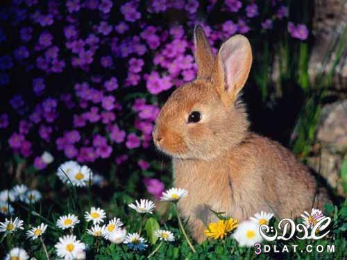 بالصور صور حيوانات اليفه , صور اكثر من رائعة لحيوانات اليفة جميلة 494 1