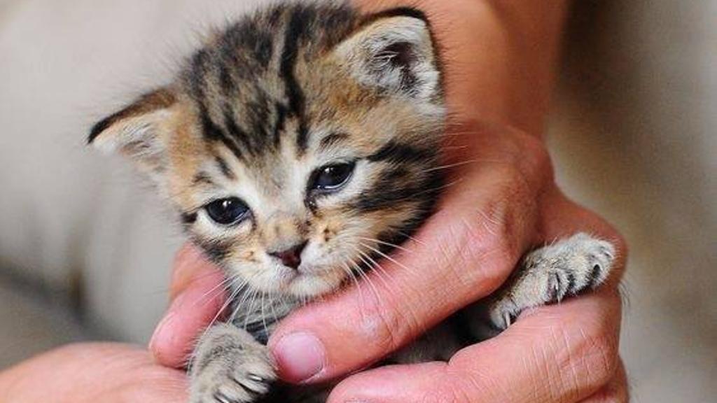 بالصور صور حيوانات اليفه , صور اكثر من رائعة لحيوانات اليفة جميلة 494 10