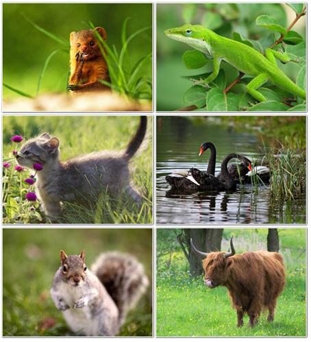 بالصور صور حيوانات اليفه , صور اكثر من رائعة لحيوانات اليفة جميلة 494 11