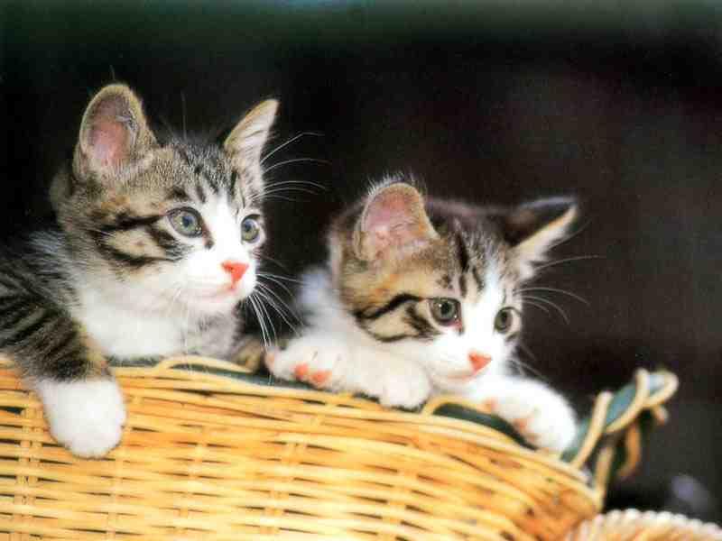بالصور صور حيوانات اليفه , صور اكثر من رائعة لحيوانات اليفة جميلة 494 12