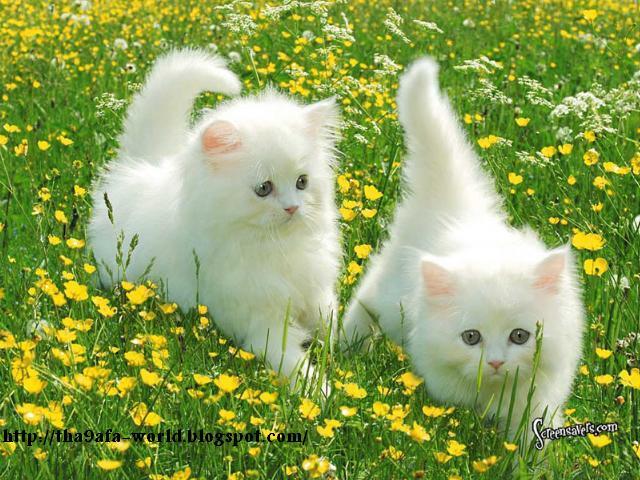 بالصور صور حيوانات اليفه , صور اكثر من رائعة لحيوانات اليفة جميلة 494 13