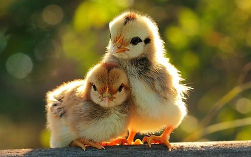 بالصور صور حيوانات اليفه , صور اكثر من رائعة لحيوانات اليفة جميلة 494 2