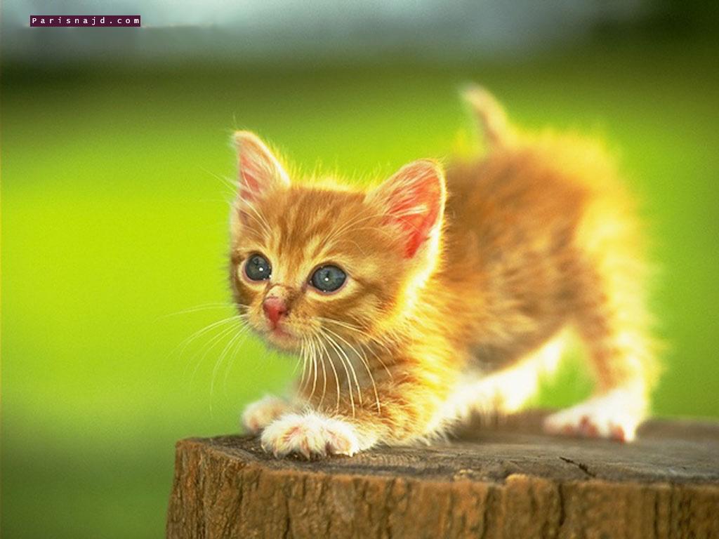 بالصور صور حيوانات اليفه , صور اكثر من رائعة لحيوانات اليفة جميلة 494 4