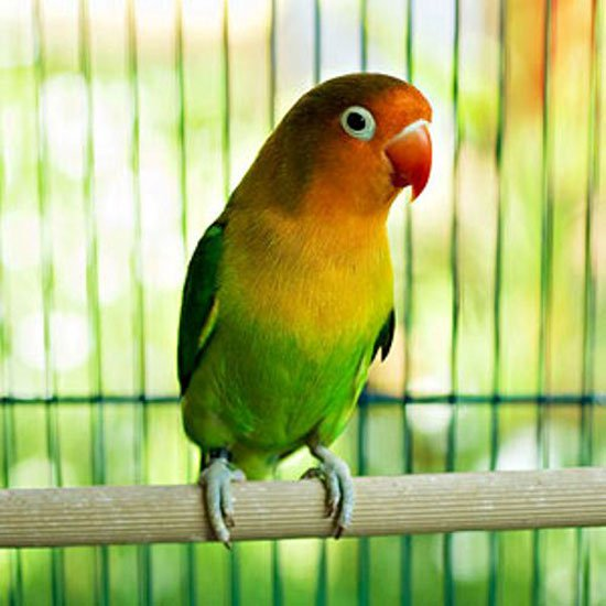 بالصور صور حيوانات اليفه , صور اكثر من رائعة لحيوانات اليفة جميلة 494 6