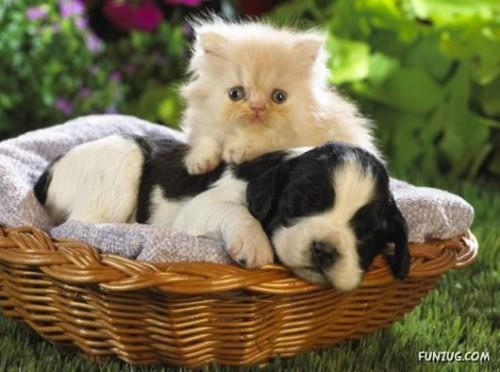 بالصور صور حيوانات اليفه , صور اكثر من رائعة لحيوانات اليفة جميلة 494 8