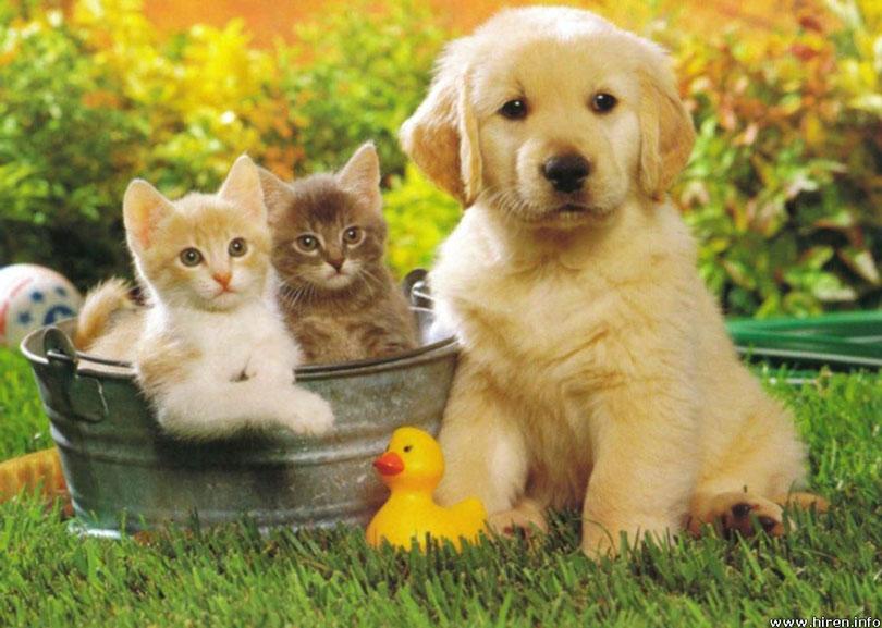 بالصور صور حيوانات اليفه , صور اكثر من رائعة لحيوانات اليفة جميلة 494