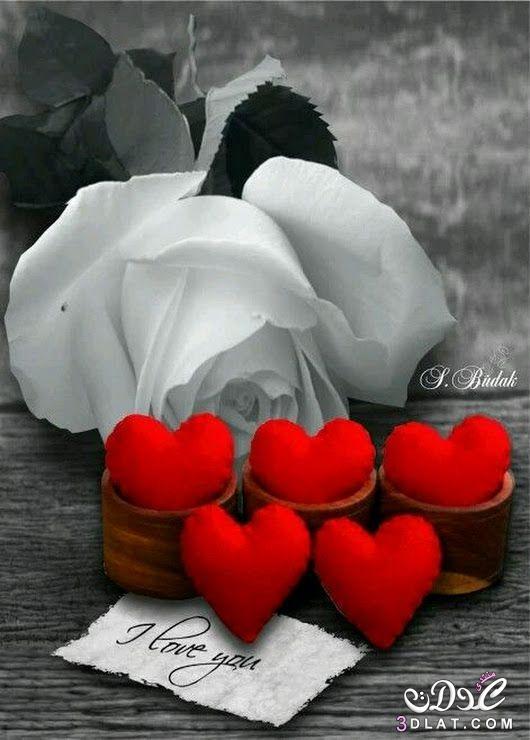 صورة اجمل الصور الرومانسية , للعشاق اجمد واجمل الصور الرومانسية 499 6