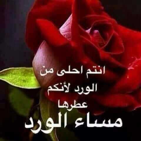 بالصور كلمات عن الورد , اجمل ماقيل في الورود 6447 2