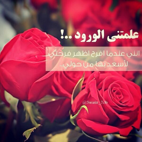 بالصور كلمات عن الورد , اجمل ماقيل في الورود 6447 3
