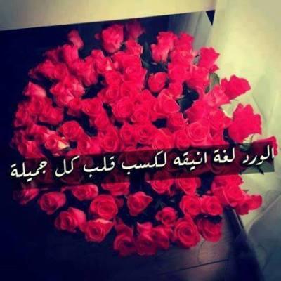 صوره كلمات عن الورد , اجمل ماقيل في الورود