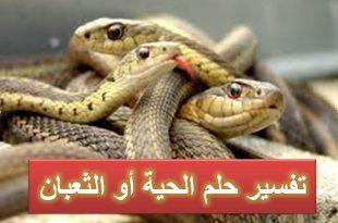 صوره رؤية الثعبان في المنام , تفسير رؤية الثعابين اثناء النوم
