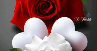 صوره صور ورد حب , اجمل ورود الحب