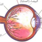 مكونات العين , تعرف علي مكونات العين من الداخل و الخارج