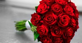 بالصور ازهار جميلة , ارق ورود رومانسية 982 12 310x165