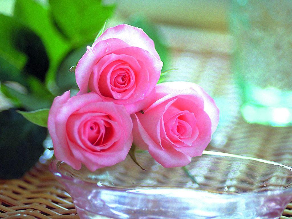 بالصور ازهار جميلة , ارق ورود رومانسية 982 2