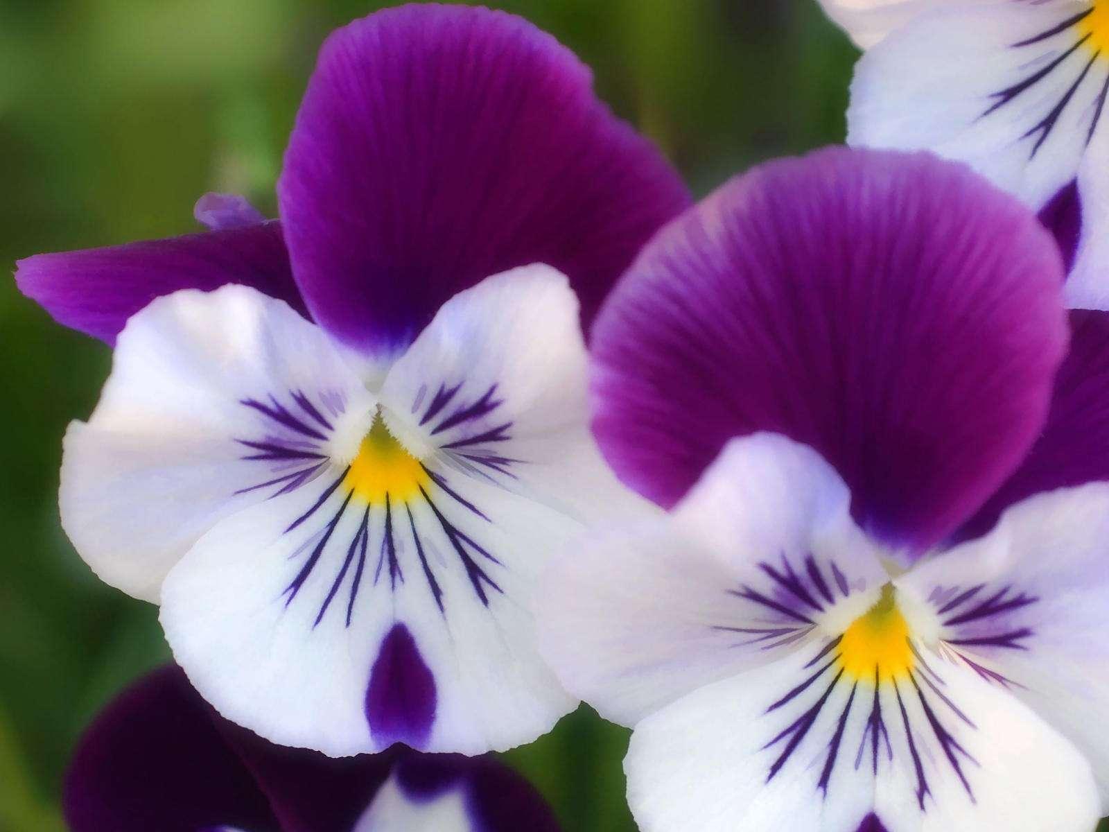بالصور ازهار جميلة , ارق ورود رومانسية 982 4
