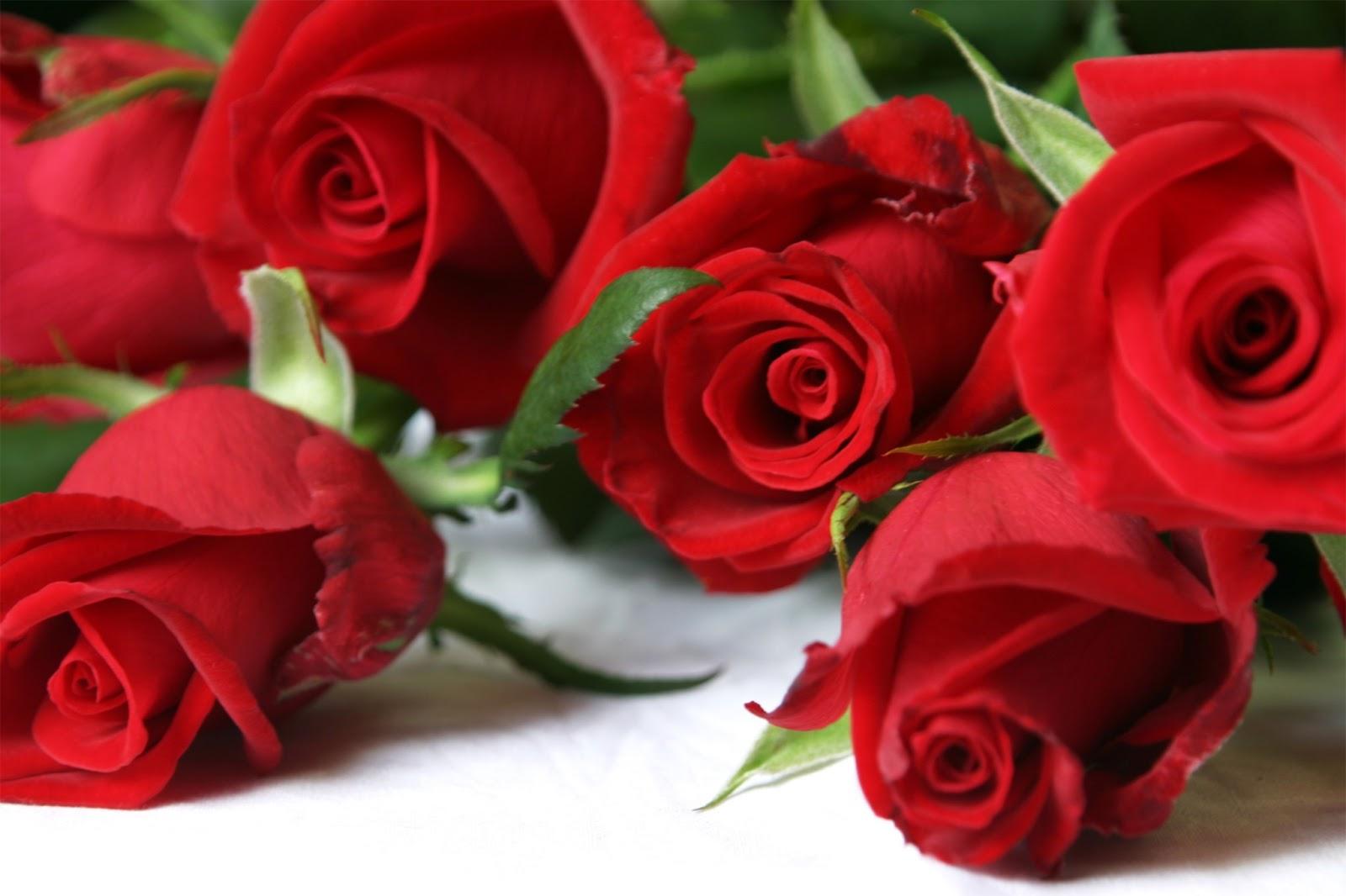 بالصور ازهار جميلة , ارق ورود رومانسية 982 9