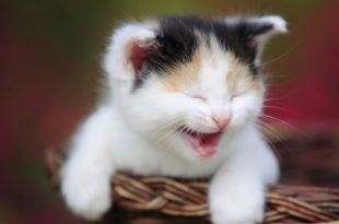 صورة صور قطط مضحكة , شاهد بالصور قطط كيوت لكن مضحكة