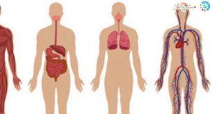 صورة صور جسم الانسان , رحلة بالصور داخل الجسد