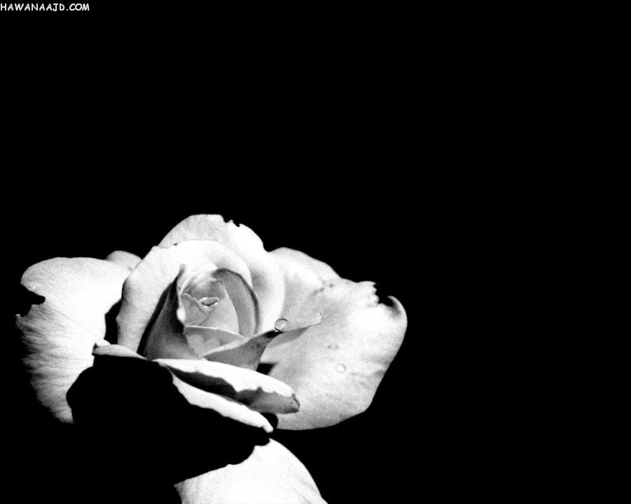 بالصور خلفية سوداء سادة , صور خلفيات غامضة باللون الاسود 900 8