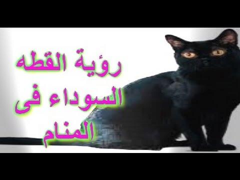 صور عضة القط في المنام , تفسير الاحلام المخيفة
