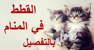 صورة عضة القط في المنام , تفسير الاحلام المخيفة
