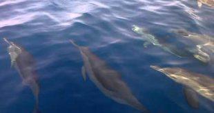 بالصور صور على البحر الاحمر , اروع واجمل الصور الرقيقة على البحر الاحمر 15110 12 310x165